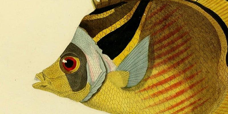 25+ Free Printable Vintage  Aquatic Images