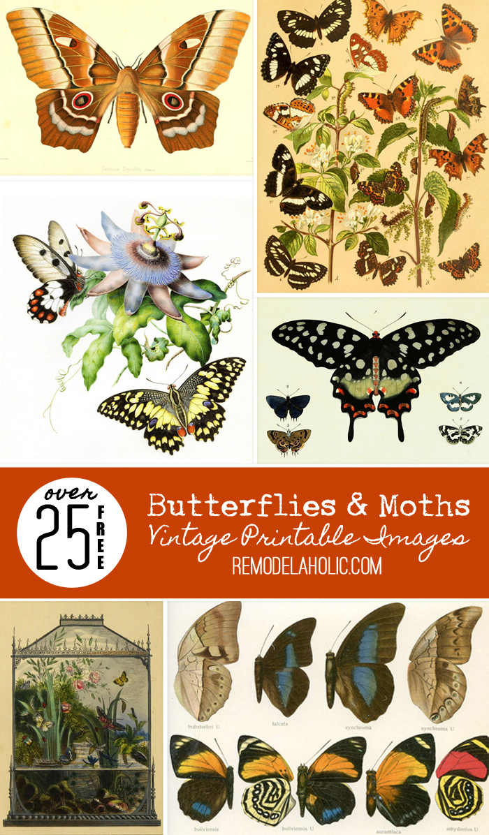 Remodelaholic 25 Free Butterflies And Moths Vintage