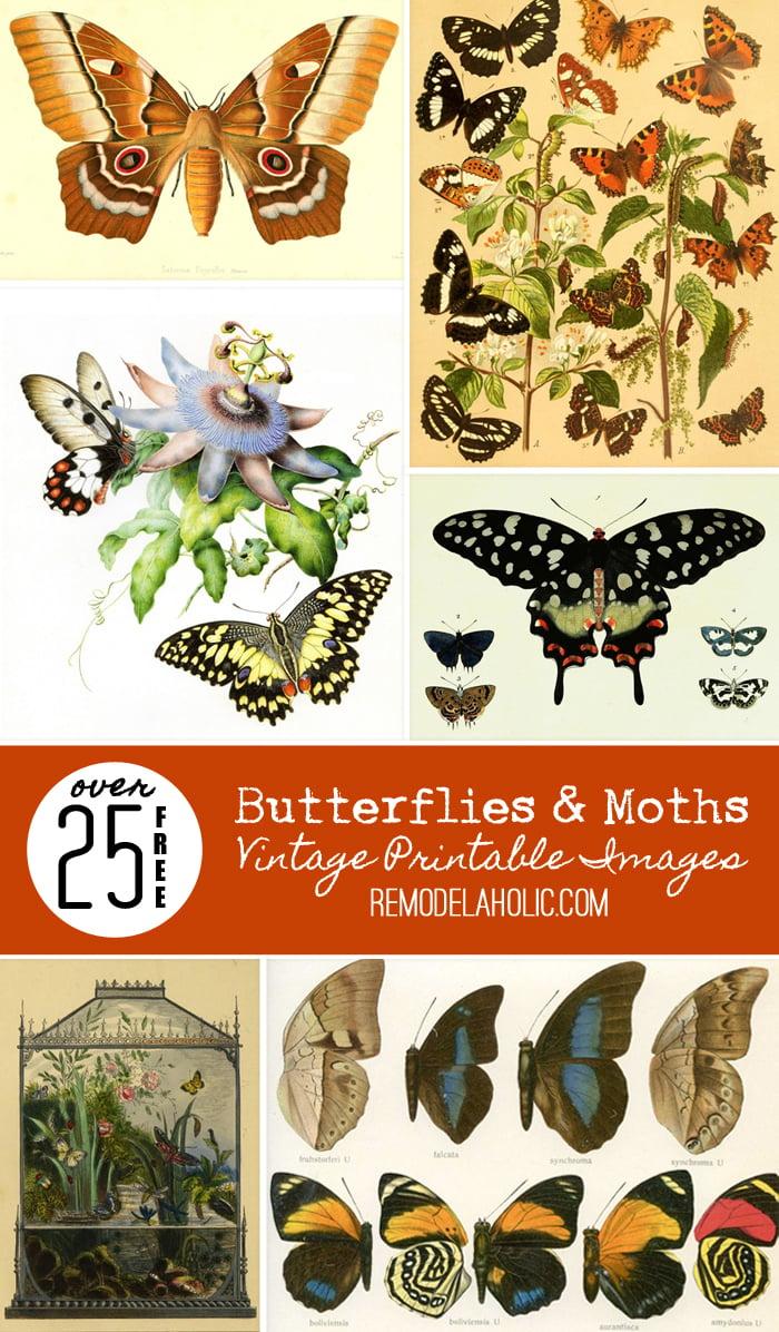 Remodelaholic 25 Free Butterflies And Moths Vintage