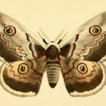 25 Free Butterly and Moth Vintage Printable Images featured