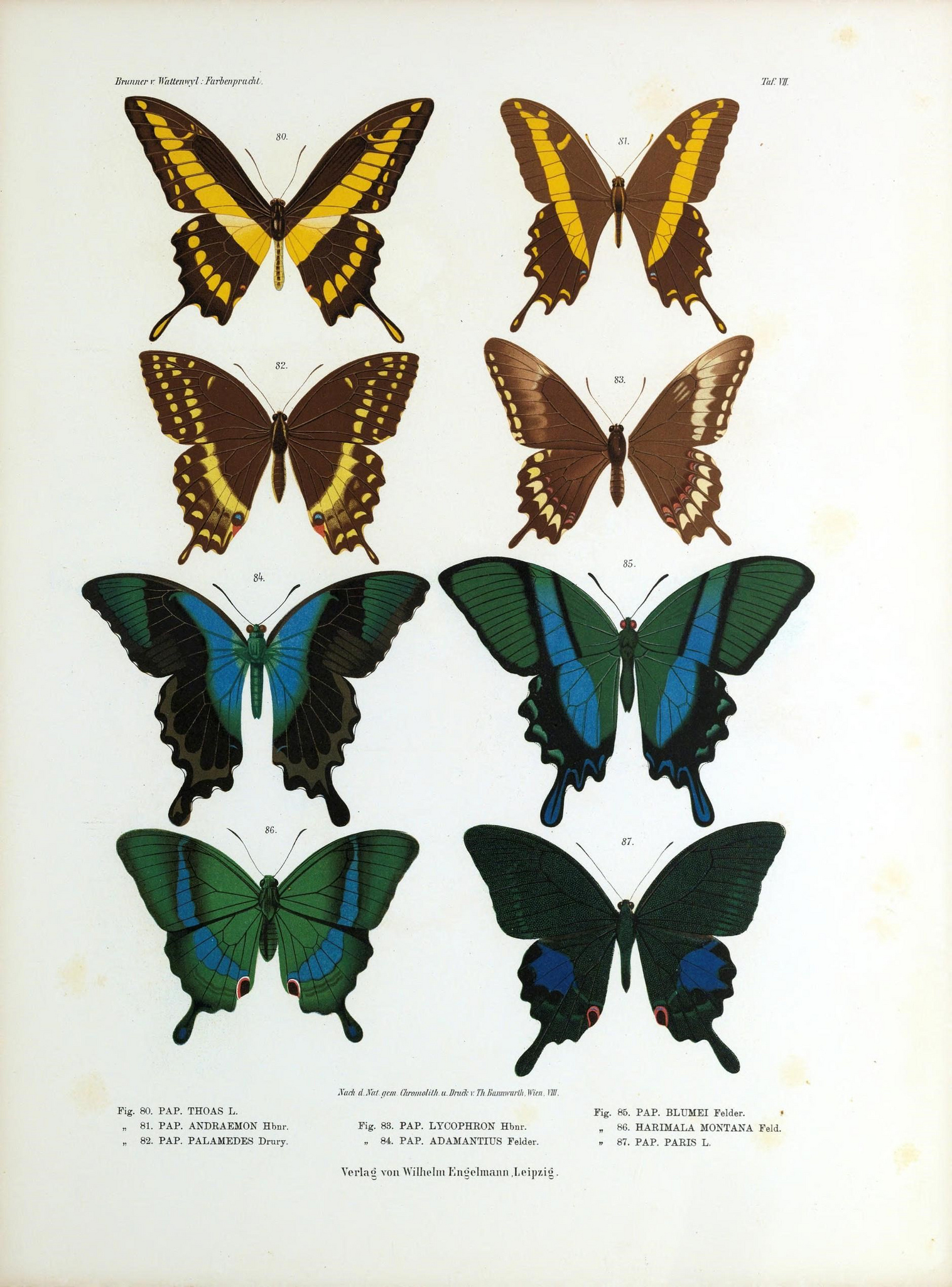 Remodelaholic | 25+ Free Butterflies and Moths Vintage ...  Vintage Butterfly Chart