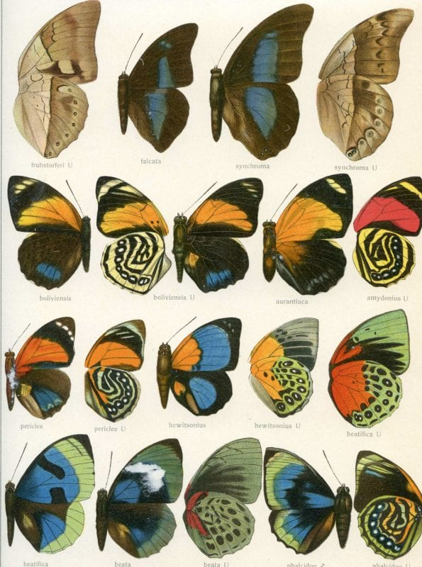 25+ Free Butterflies and Moths Vintage Printable Art Images
