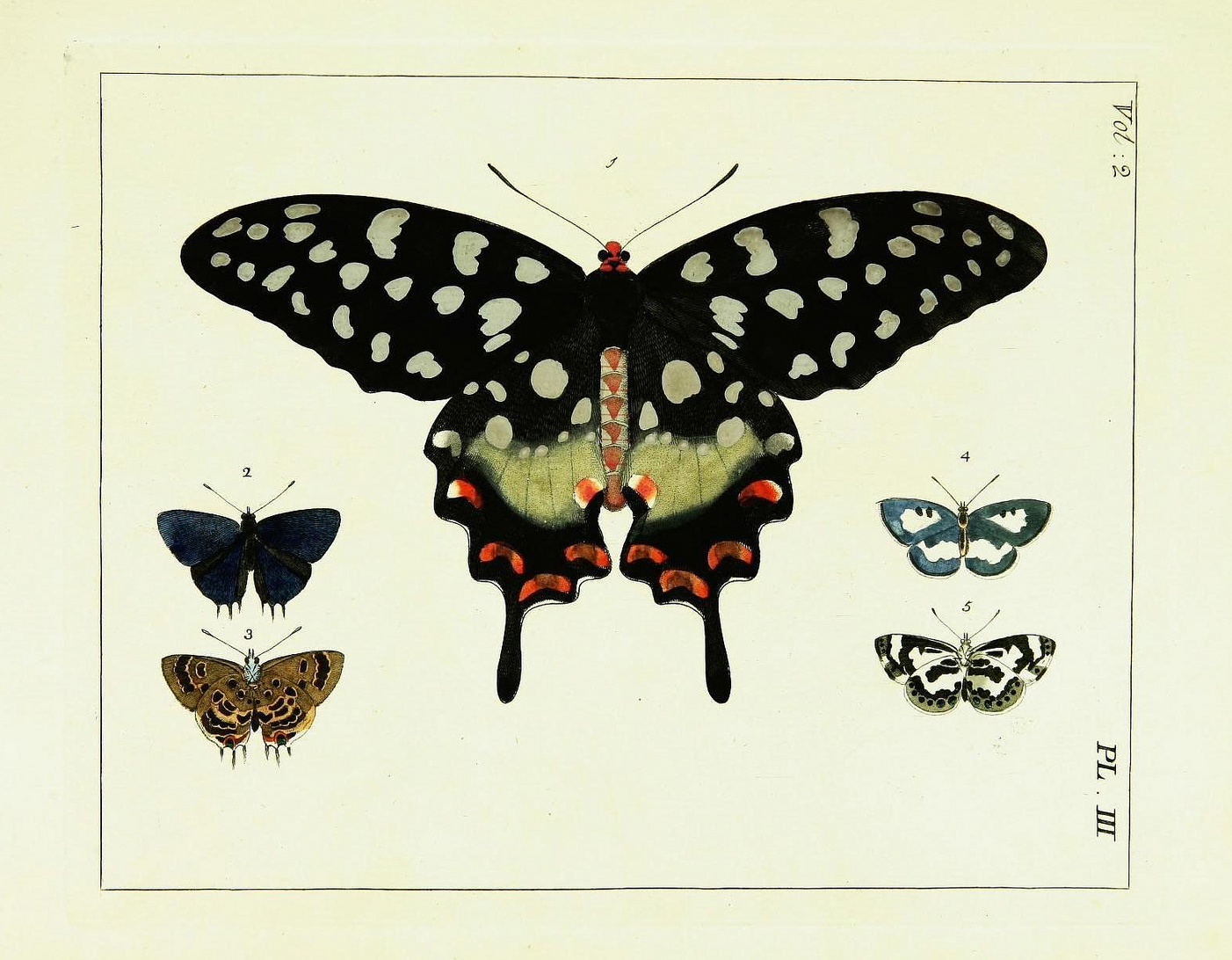 evejulien 25 free butterflies and moths vintage printable images