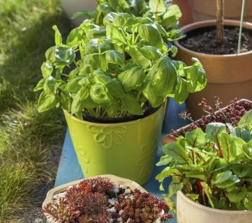9 Tips for Container Gardening