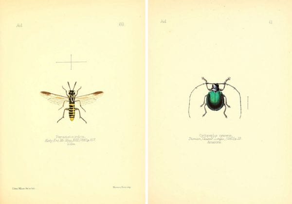 These colorful vintage insect images make such great art!