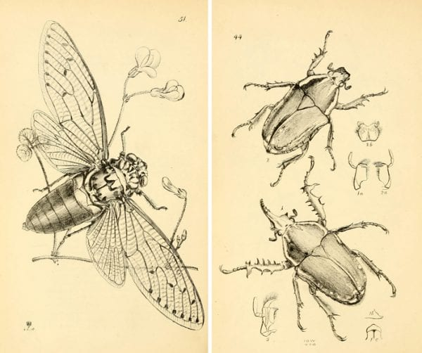 Over 25 gorgeous and free vintage insect printables!