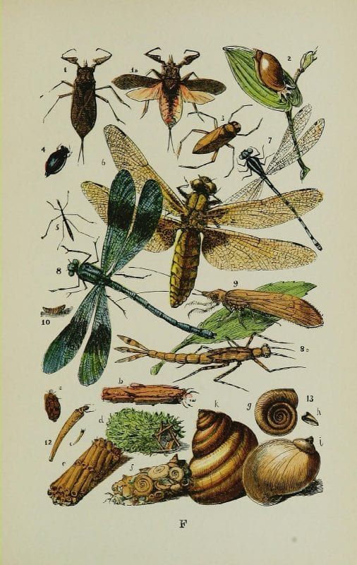 Free cintage insect images make gorgeous art!