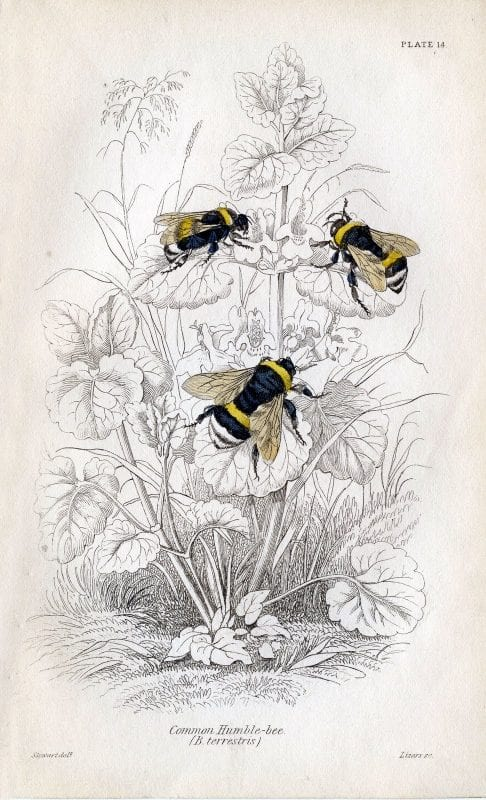 Lovely and free vintage art! Over 25 free vintage insect printables.