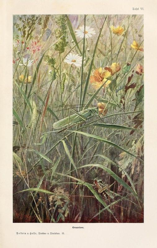 Lovely free vintage grasshopper art printable