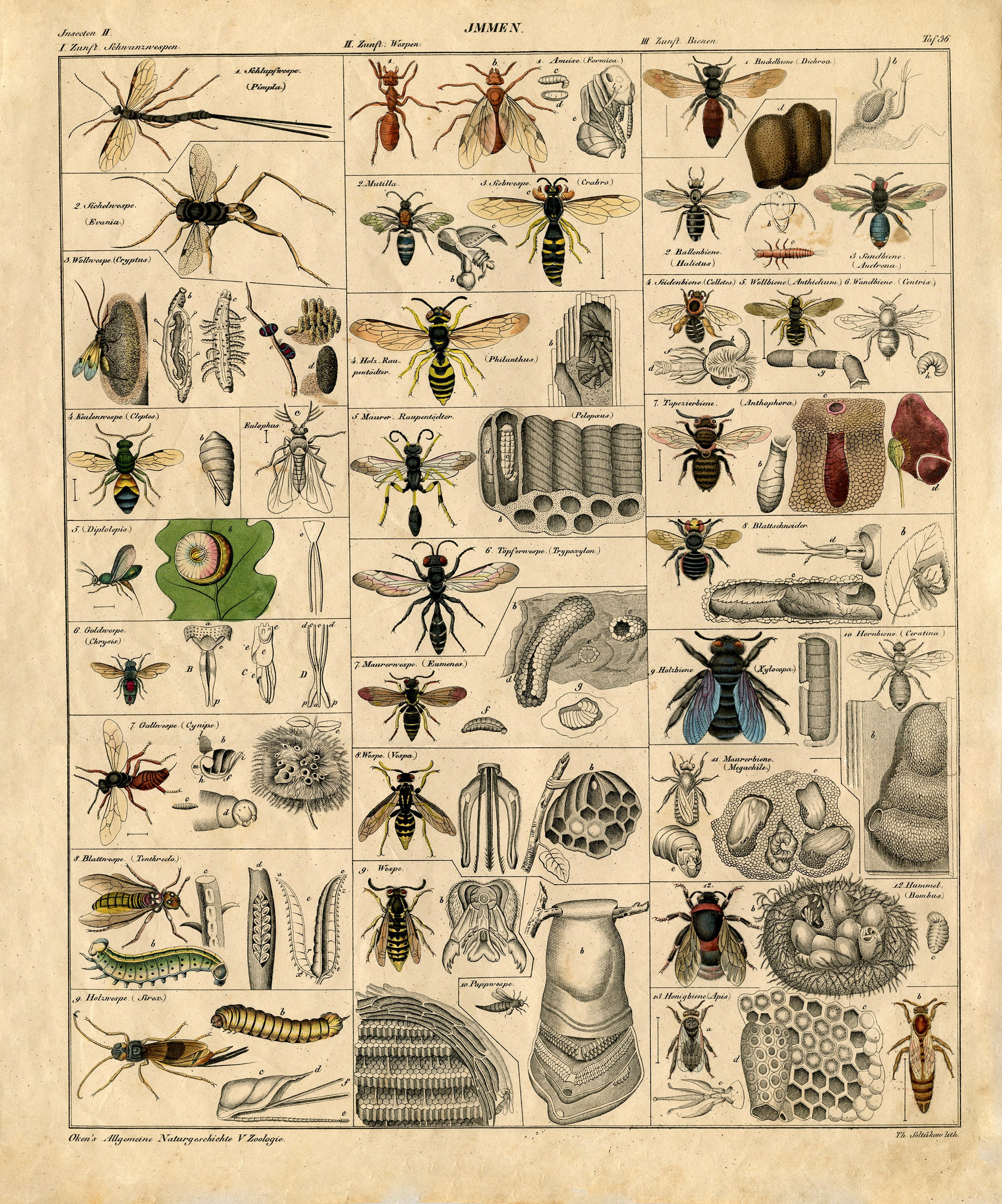 Awesome Vintage Anatomy Posters Vignette Human Anatomy Images