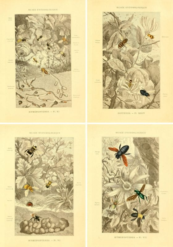 These vintage insect printables are gorgeous!