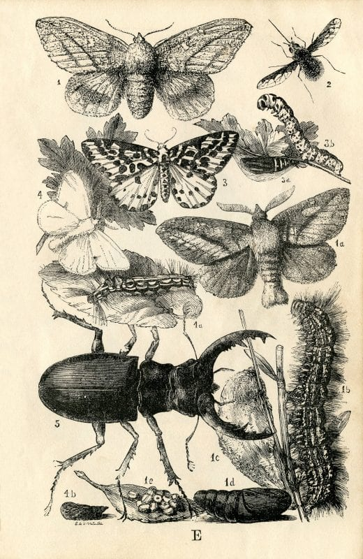 Gorgeous free art! Vintage insect printables.
