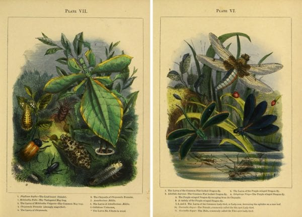 Lovely vintage printable insect images!