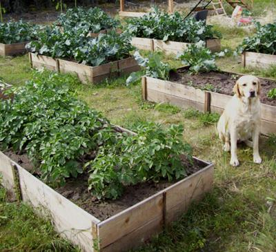 Raised Garden Bed Fence Pickets
