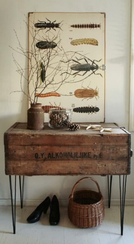 Vintage school-chart style insect art
