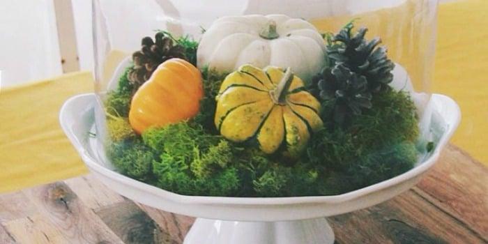 feat pumpkin terrarium under glass cloche by rosannastable