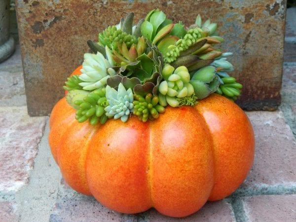 succulent pumpkin planter tobieanne on etsy