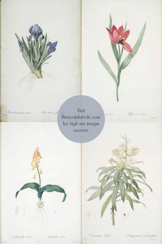 free vintage flower illustrations to print via NYPL @Remodelaholic