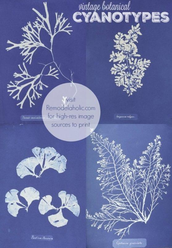vintage botanical cyanotypes to print for decor via NYPL @Remodelaholic