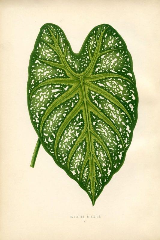 Free Vintage Leaves Image 10