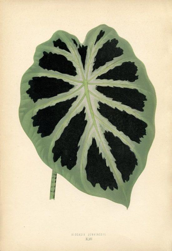Free Vintage Leaves Image 12