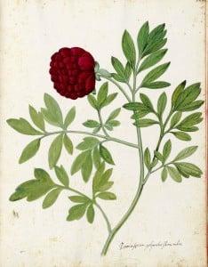 Free Vintage Leaves Image 28