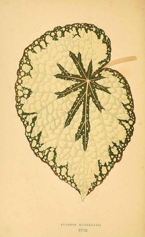 Free Vintage Leaves Image 36