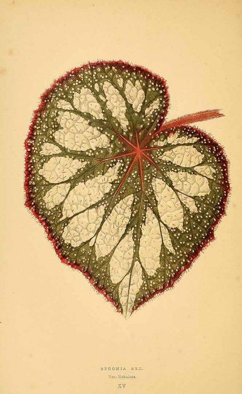Free Vintage Leaves Image 38