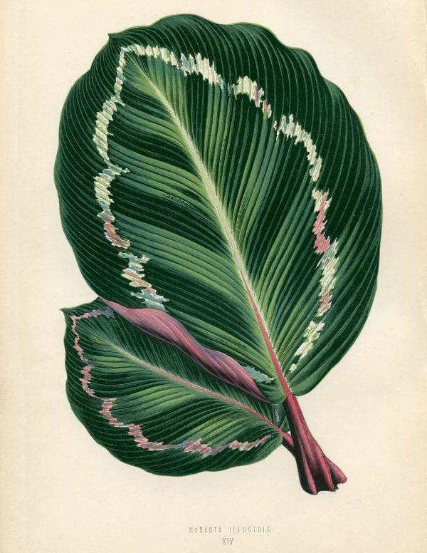 Free Vintage Leaves Image 6