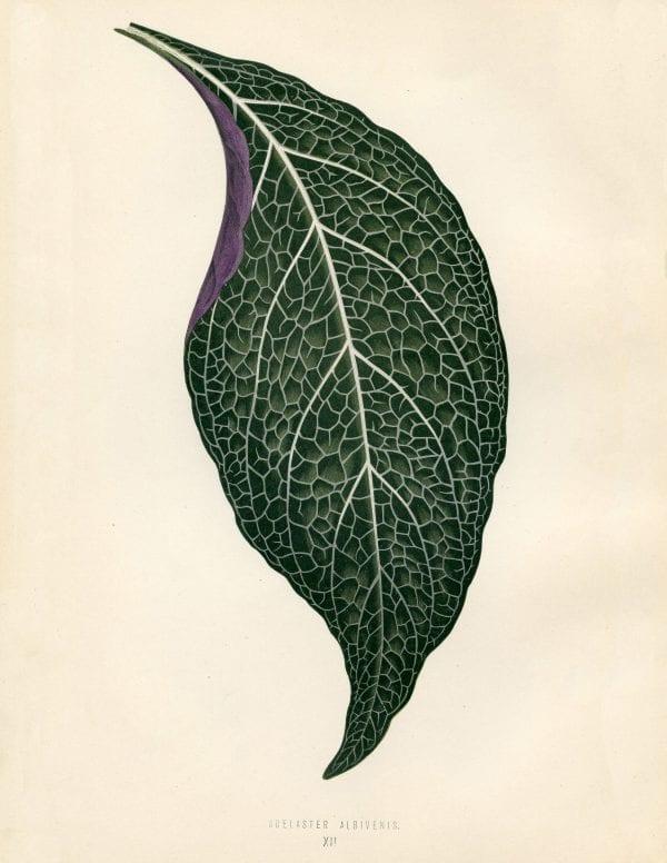Free Vintage Leaves Image 7