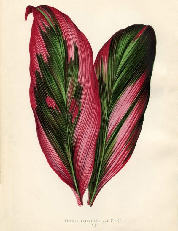 Free Vintage Leaves Image 8