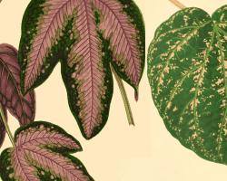 Remodelaholic vintage leaf single