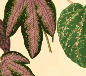 50 Free Vintage Leaf Images to Print