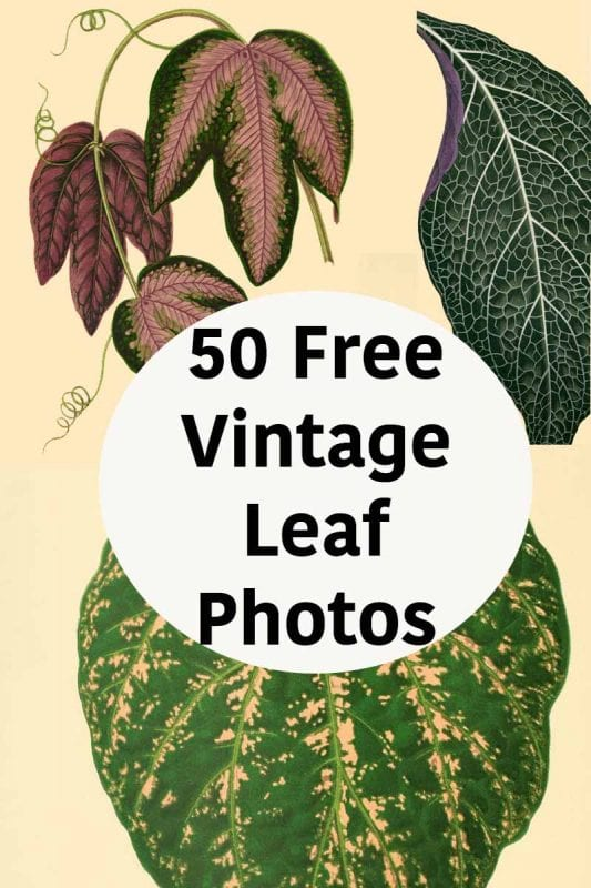 just print a set of these beautiful vintage leaf prints frame