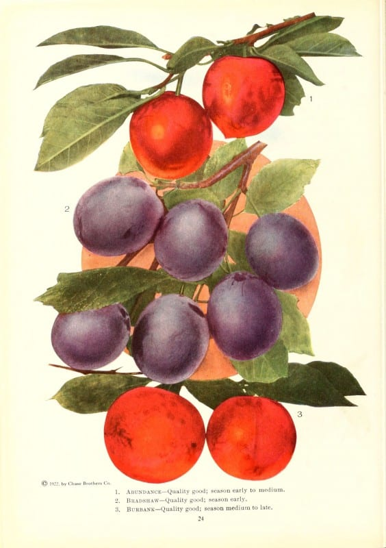 Chase fruit and flowers in natural colors Rochester, N.Y.,Chase brothers company[c1922] https://biodiversitylibrary.org/item/79728