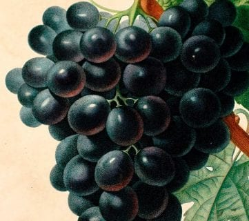20+ Free Vintage Fruit Images