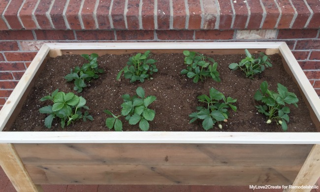 Top view of elevated planter box, MyLove2Create for Remodelaholic