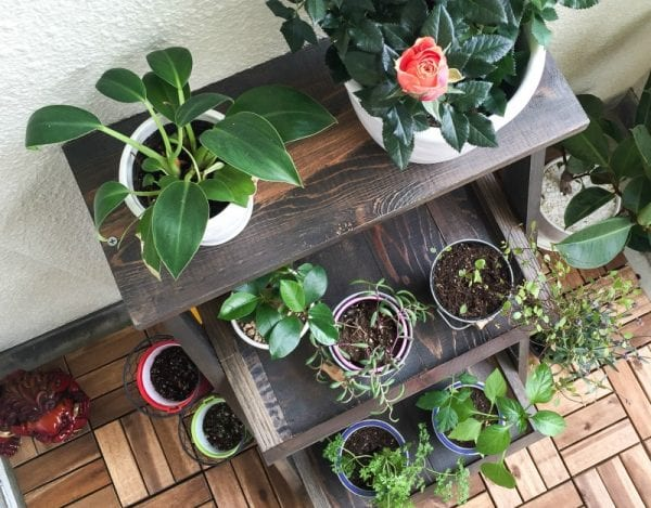 feat Ladder Plant Stand