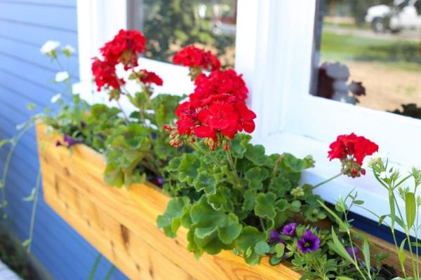 Custom Cottage Window Box, Geraniums-1
