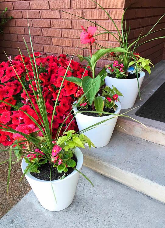 Nimbus Pot Self Watering pots @remodelaholic-5