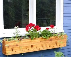 Window Box Tutorial Feature Image-1