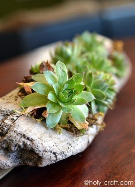 rachel teodoro driftwood succulent planter