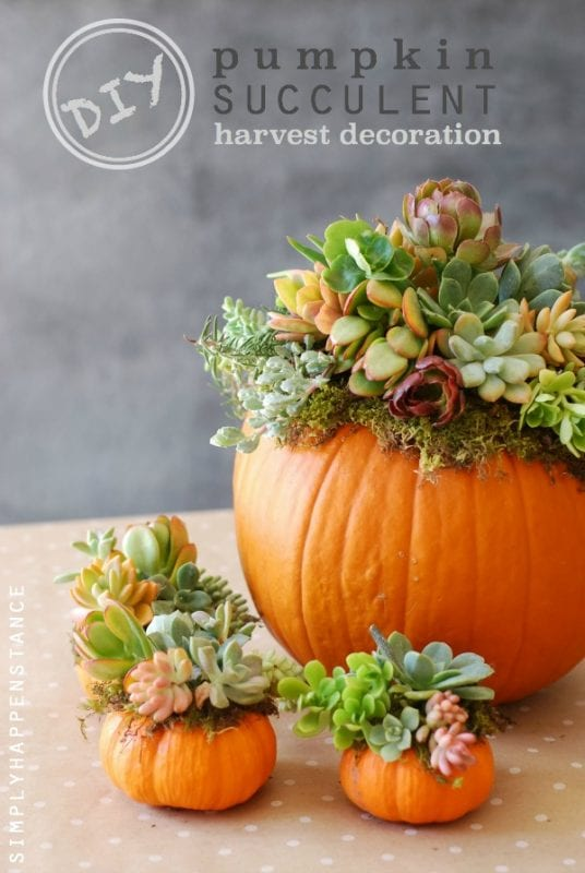 pumpkin-succulent-centerpiece-diy-simply-happenstance