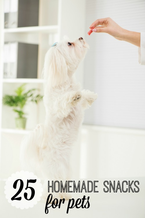Portrait Maltese Dog Standing On Two Legs With Delight