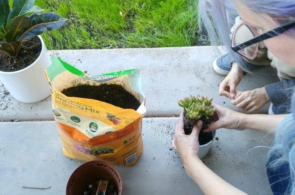 Planting Modern West Elm Planter Knockoff