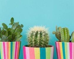 Feature Image DIY Plant Pots