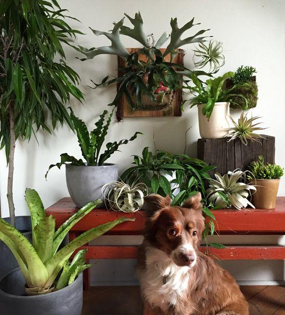 Pet-Friendly Home Decor Tips