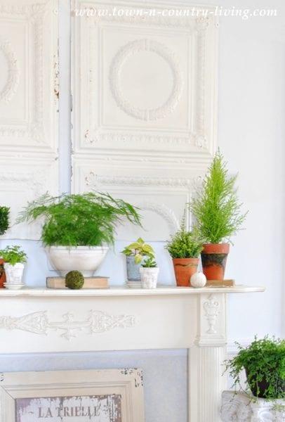 Botanic Mantel