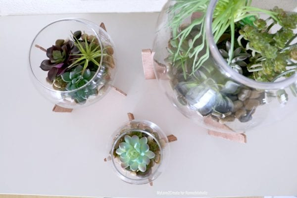 Top View Looking Into Terrariums, MyLove2Create