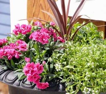 How To Create Beautiful Outdoor Pots and Planters